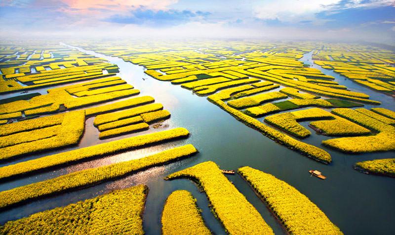 实拍:世界最美油菜花海